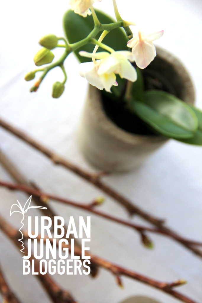 urban jungle bloggers spring + easter