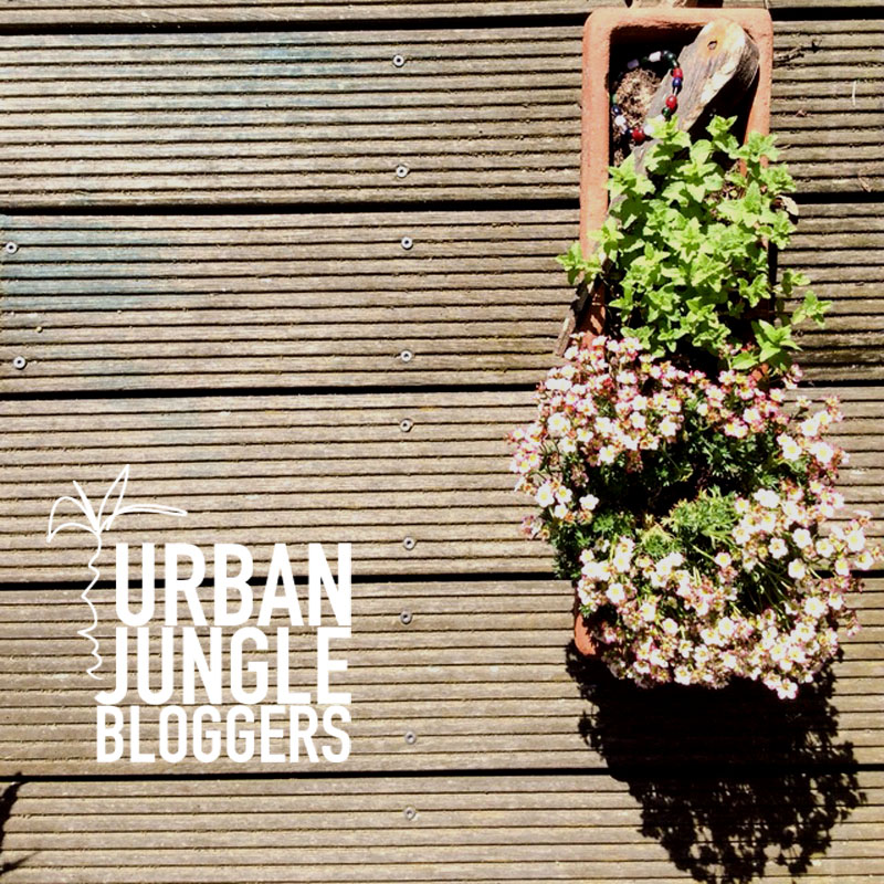 Urban Jungle Bloggers - Balkon und Fensterbank