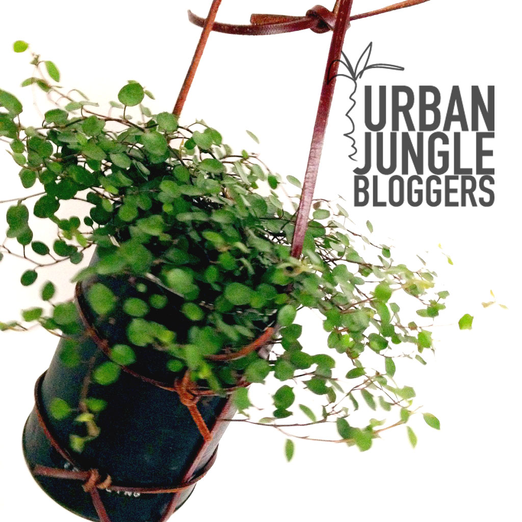 Blumenampel DIY - urban jungle bloggers