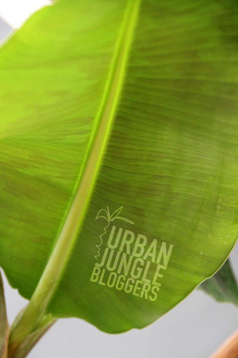 green plant gang - Urban Jungle Bloggers